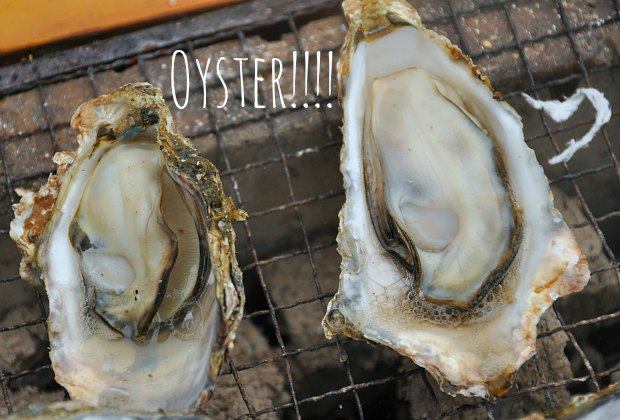 oyster0489